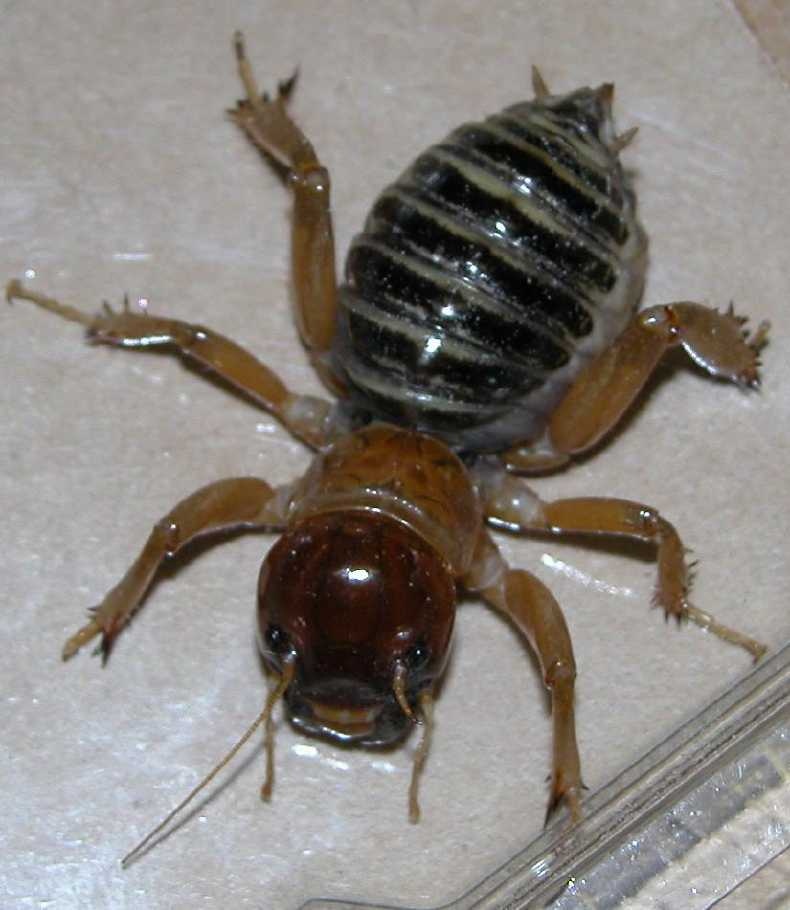 Most Disgusting Insect/bug You've Spotted At Your House